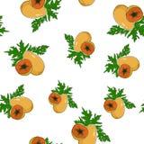 Seamless Pattern of  Papaya Royalty Free Stock Photo