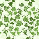 Seamless pattern with  parsley Stock Photography
