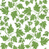 Seamless pattern with  parsley Stock Images