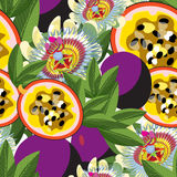 Seamless pattern passion flower Blue tropical fruit maracuya . v Stock Image