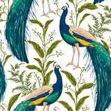 Seamless pattern with peacock, flowers and leaves. Stock Images