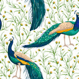 Seamless pattern with peacock, flowers and leaves. stock illustration