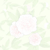 Seamless pattern peonies and buds on a light background.vector illustration Royalty Free Stock Image