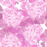 Seamless pattern with peonies. Royalty Free Stock Photo