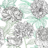 Seamless pattern of peonies graphics Royalty Free Stock Images