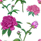 Seamless pattern with peonies Royalty Free Stock Photos