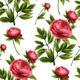Seamless pattern with peony flowers. Vector Royalty Free Stock Images
