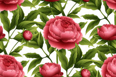 Seamless pattern with peony flowers. Vector Royalty Free Stock Photography