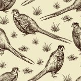 Seamless pattern with pheasants. Stock Image