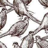 Seamless pattern with pheasants. Antique engraving illustration with birds vector illustration