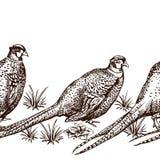 Seamless pattern with pheasants. Stock Photos