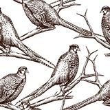 Seamless pattern with pheasants. Antique engraving illustration with birds royalty free illustration