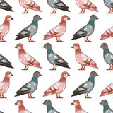 Seamless pattern with pigeons Stock Photography