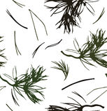 Seamless pattern with  pine branches. Vector background with needles. Nature graphic Stock Images