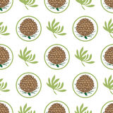 Seamless pattern with pine cones. Fir, cedar, spruce tree background. eco label Royalty Free Stock Images