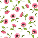 Seamless pattern with pink anemone flowers. Vector illustration. Stock Photography
