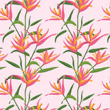 Seamless pattern with Pink Bird of Paradise. Royalty Free Stock Images