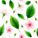 Seamless pattern of pink cherry flowers and green leaves on whit Royalty Free Stock Images