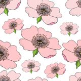 Seamless pattern of pink flowering of dog rose on white . Rose hip illustration. Seamless pattern of pink flowering of dog rose on white background. Rose hip Stock Images