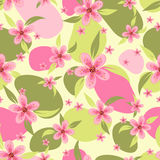 Seamless pattern with a pink flowers Stock Image