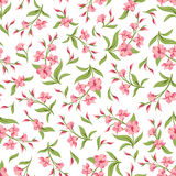 Seamless pattern with pink flowers. Vector illustration. Stock Images