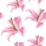 Seamless pattern with pink lilies on white background. Watercolor illustration Royalty Free Stock Photos