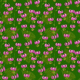 Seamless pattern with pink Lilium martagon Royalty Free Stock Photo