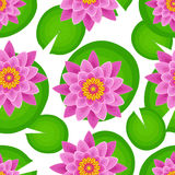 Seamless pattern with pink lotus Royalty Free Stock Images