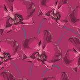 Seamless pattern with pink orchid. Texture of flowers Stock Images