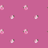 Seamless pattern with pink peonies Royalty Free Stock Photos