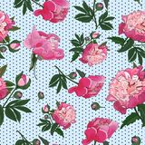 Seamless pattern with pink peonies on small polka dot background. Vector. royalty free illustration