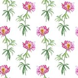 Seamless pattern with pink peony flower. Seamless pattern with watercolor drawing pink peony flowers at white background, hand drawn illustration royalty free stock images