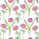 Seamless pattern with pink peony flowers. Seamless pattern with watercolor drawing pink peony and tulip flowers at white background, hand drawn illustration royalty free stock photos