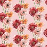 Seamless pattern with pink, red and orange gerberas on a pink background. Watercolor illustration. royalty free stock photos