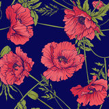 Seamless pattern with pink and red poppy flowers in botanical st. Yle on blue background. Stock line vector illustration Royalty Free Stock Photos