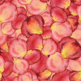 Seamless pattern of pink rose petals. Watercolor seamless pattern of pink rose petals, hand painted watercolor illustration, design for fabric, textile, wrapping Stock Images