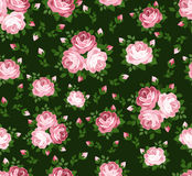 Vector seamless pattern with pink roses. Royalty Free Stock Images