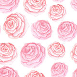 Seamless pattern with pink roses Stock Images