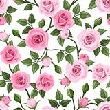 Seamless pattern with pink roses. Vector illustrat