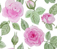 Seamless pattern with pink roses. Royalty Free Stock Photo