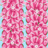 Seamless pattern with a pink tulips, vector illustration Stock Images