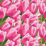 Seamless pattern with a pink tulips vector illustration