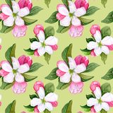 Seamless pattern with pink and white flowers apple and peach. Seamless pattern with watercolor apple flowers and leaves. Seamless pattern with pink and white royalty free illustration