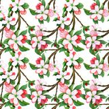 Seamless pattern with pink and white flowers apple and peach. Seamless pattern with watercolor apple flowers and leaves. Seamless pattern with pink and white vector illustration