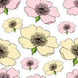 Seamless pattern of pink and yellow flowering of dog rose on white .. Seamless pattern of pink and yellow flowering of dog rose on white background. Rose hip Stock Image