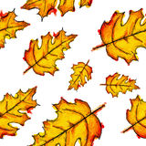 Seamless Pattern Of Pinnately Lobed Leaves Watercolor. Art Stock Photography