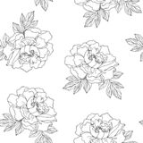 Seamless pattern. Pion. Black outline on transparent background royalty free stock photos