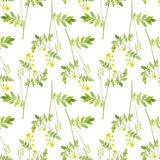 Seamless pattern with plant of celandine. Seamless pattern with flowers of celandine, watercolor drawing floral background, botanical illustration in vintage Stock Photo