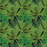 Seamless pattern with plants Stock Images