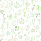 Seamless pattern of plants and herbs, floral background Royalty Free Stock Photography
